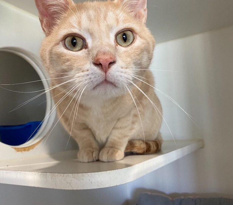 Adopt the Featured Cat of the Week from Chequamegon Humane Association