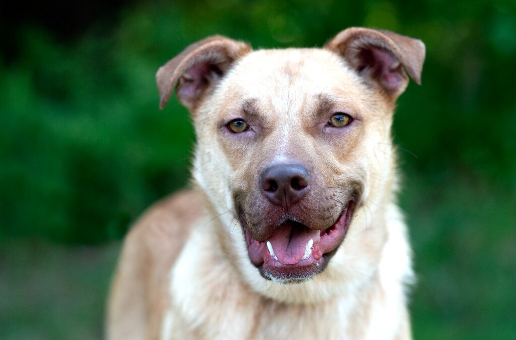 Adopt Chequamegon Human Association's Featured Pet