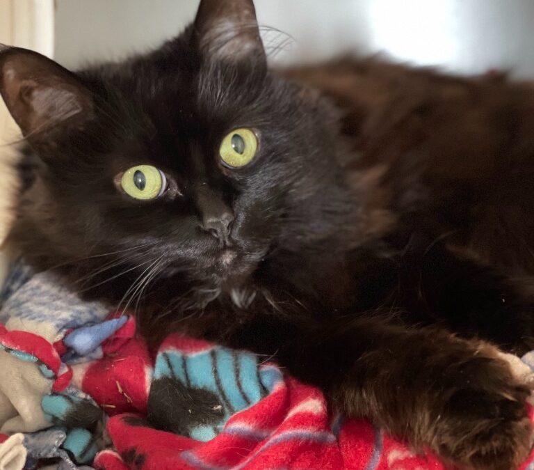 Adopt Chequamegon Humane Association's Pet of the Week