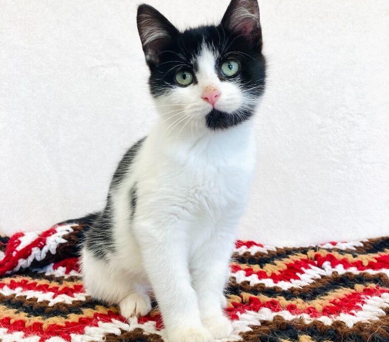 Pet of the Week: Nadia