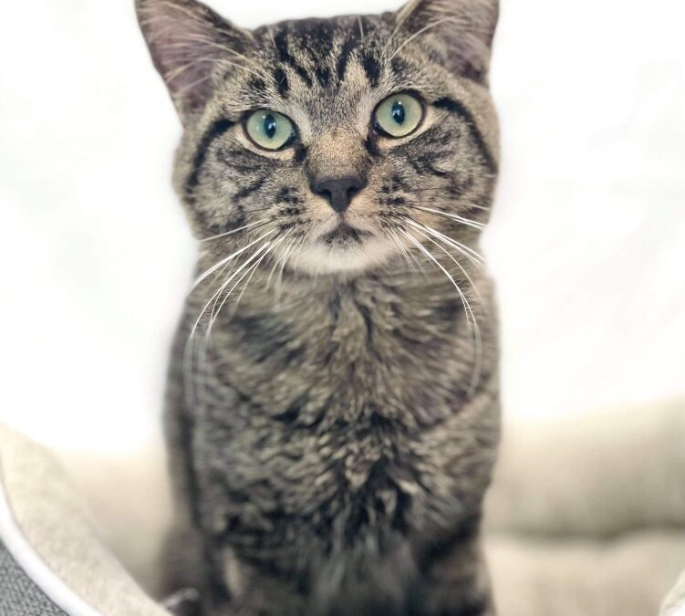 Pet of the Week: Irving